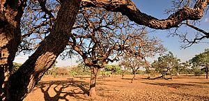 Seca: relatório mostra que quase 33% do estado de Alagoas foi afetado pela desertificação
