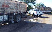 Operação apreende 13 mil frangos transportados de forma irregular