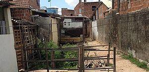 Moradores sobre palafitas no Recife sofrem em dobro para cumprir quarentena