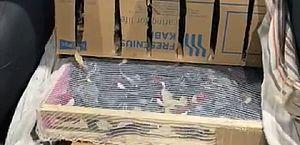 Homens flagrados com cerca de 800 aves terão que pagar um milhão de reais em multas