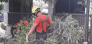 Árvore tomba e bloqueia acesso a condomínio na Jatiúca; veja vídeo