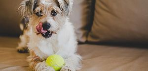 Veja os 9 melhores brinquedos para manter seu animal de estimação feliz