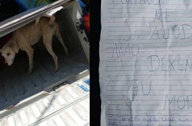 """Guardas salvam cadela abandonada no CE com um bilhete escrito """"não me deixem morrer"""""""