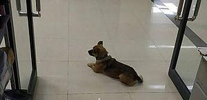 Cão espera dono em hospital por quase três meses; homem morreu da Covid-19 no quinto dia