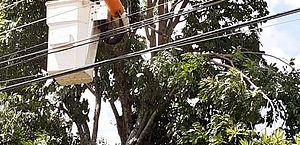 Saiba como plantar e realizar a poda de árvores próximas a rede elétrica