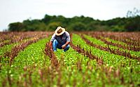 Declaração do Imposto sobre a Propriedade Territorial Rural deve ser entregue até esta quarta-feira, 30