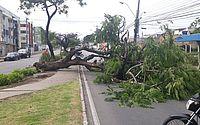 Árvore cai no Murilópolis e faz com que motoristas andem na contramão