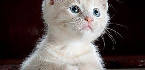 Veterinários não indicam água e sabão para felinos