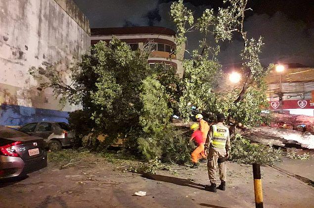 Rua das Árvores volta a ser bloqueada nesta manhã para corte de árvores