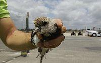 Aeroporto de Salvador adota captura de animais, reúso de água e painéis solares