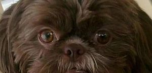Eutanásia de Emma foi realizada para atender a pedido da dona da cadela