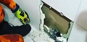 Bombeiros resgatam filhotes de gato presos no interior de parede, em Fortaleza; vídeo