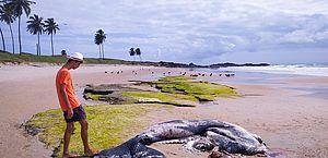 Filhote de baleia é achado morto na praia de Enseada dos Corais, em PE