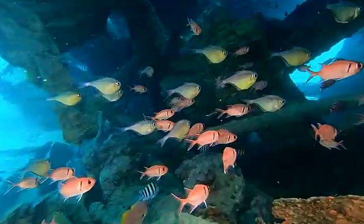 Ima divulgou imagens do fundo do mar de Pajuçara