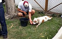 Asfalto ficou com rastro de sangue do pit bull, conta veterinário