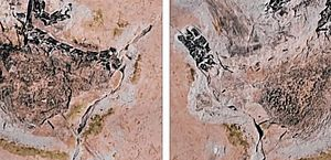 Alemanha se recusa a devolver fóssil de dinossauro encontrado no Ceará