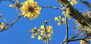 Sob efeito da La Niña, primavera começa esta tarde