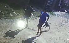 Dupla é perseguida por cão após cometer assalto.