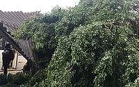 Queda de árvore derruba parte da estrutura de terminal de ônibus na Colina
