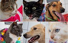 Cães e gatos já estão castrados e tratados