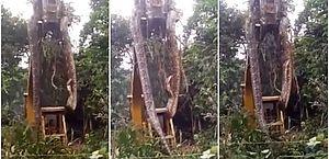 Cobra gigante é retirada de floresta por escavadeira; veja o vídeo