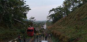 Rondônia: árvore cai sobre carreta e carro após forte chuva