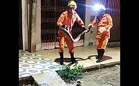 Jiboia de 3 metros capturada pelos bombeiros em abril, em Arapiraca