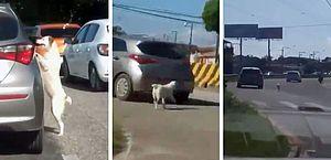 Cachorro é abandonado em Belém e gera revolta; assista!