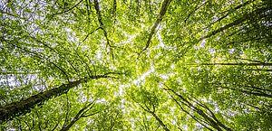Plantar um trilhão de árvores não impedirá a mudança climática