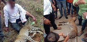 Homem estrangula leopardo para salvar a família