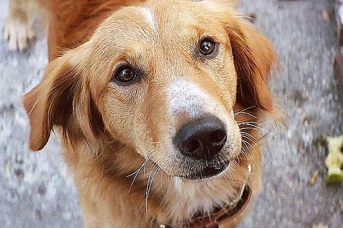 Doençca atinge cães e humanos