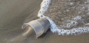 Pesquisa mapeia a ingestão de microplástico por peixes em praia de Fortaleza