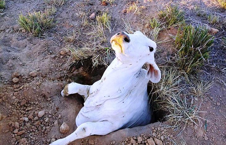 Animal foi retirado de buraco pelos bombeiros