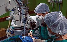 Pesquisadores da USP planejam testes para usar rim suíno em humanos