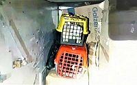 14 filhotes de cães de raça são encontrados em bagageiro de ônibus na Bahia