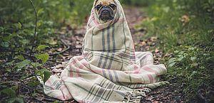 Saiba cuidar do seu pet no frio