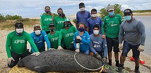 Peixe-boi encalhado é resgatado por biólogos, em Coruripe