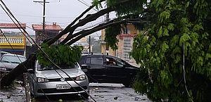 Chuva provoca queda de árvores e alagamentos na Grande São Paulo