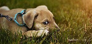 Descubra os 10 principais medos dos cachorros