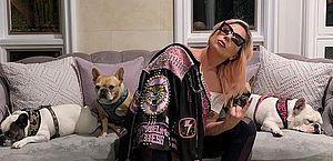 Cachorros de Lady Gaga são roubados durante passeio com 'dog walker'; rapaz foi baleado durante ação