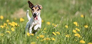 Veja os nomes de cachorros mais comuns no Brasil