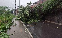 Após chuva forte, árvore cai e bloqueia trânsito na Ladeira da Moenda nesta quinta